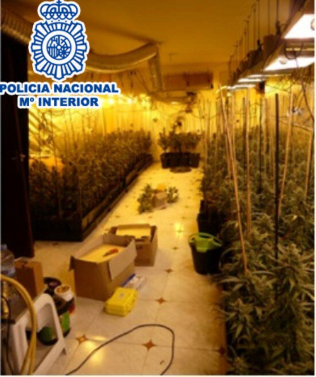 Cau una màfia de la marihuana que operava a ple de cases okupades al Baix Llobregat