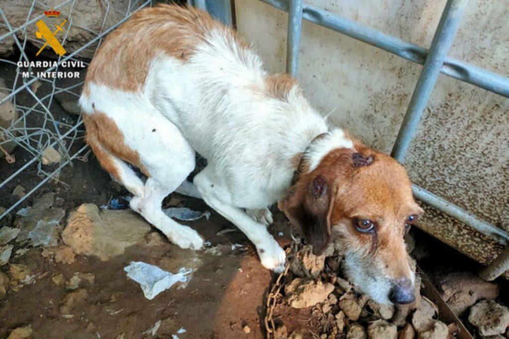 Greu cas de maltractament a animals a Olot